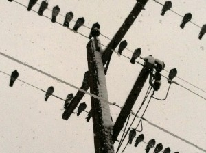 CalmUp® photo of birds on telephone wire