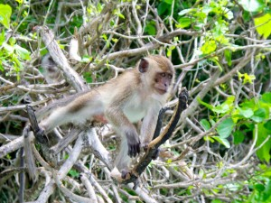 CalmUp® photo of monkeys