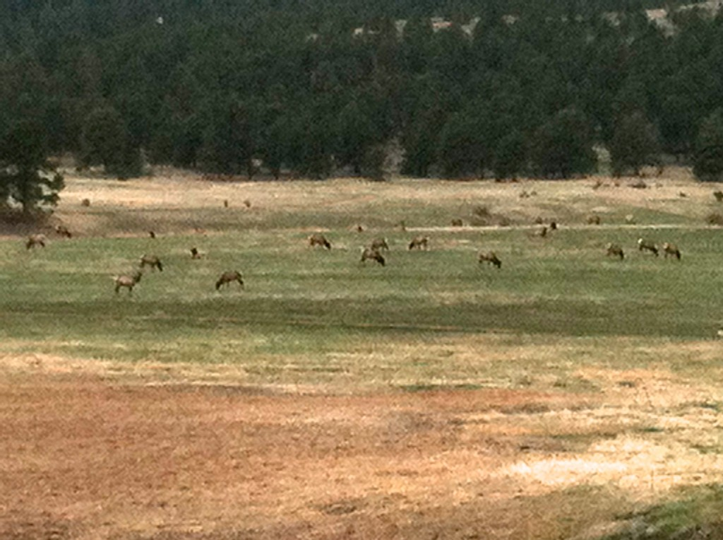CalmUp® photo of elk in Evergreen