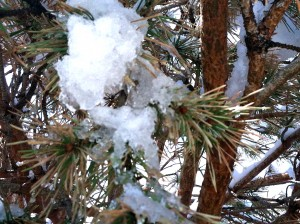 CalmUp® photo of melting snow on pine