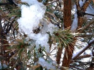 CalmUp® photo of melting snow on pine