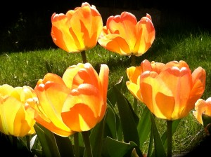 CalmUp® photo of more orange flowers