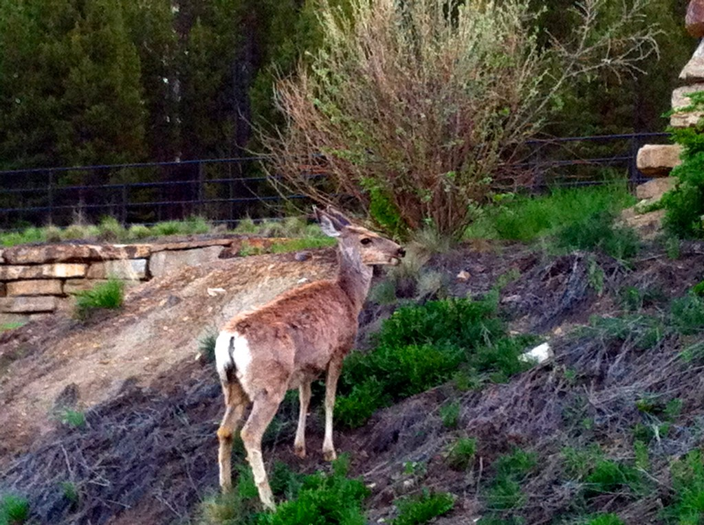 CalmUp® photo of deer