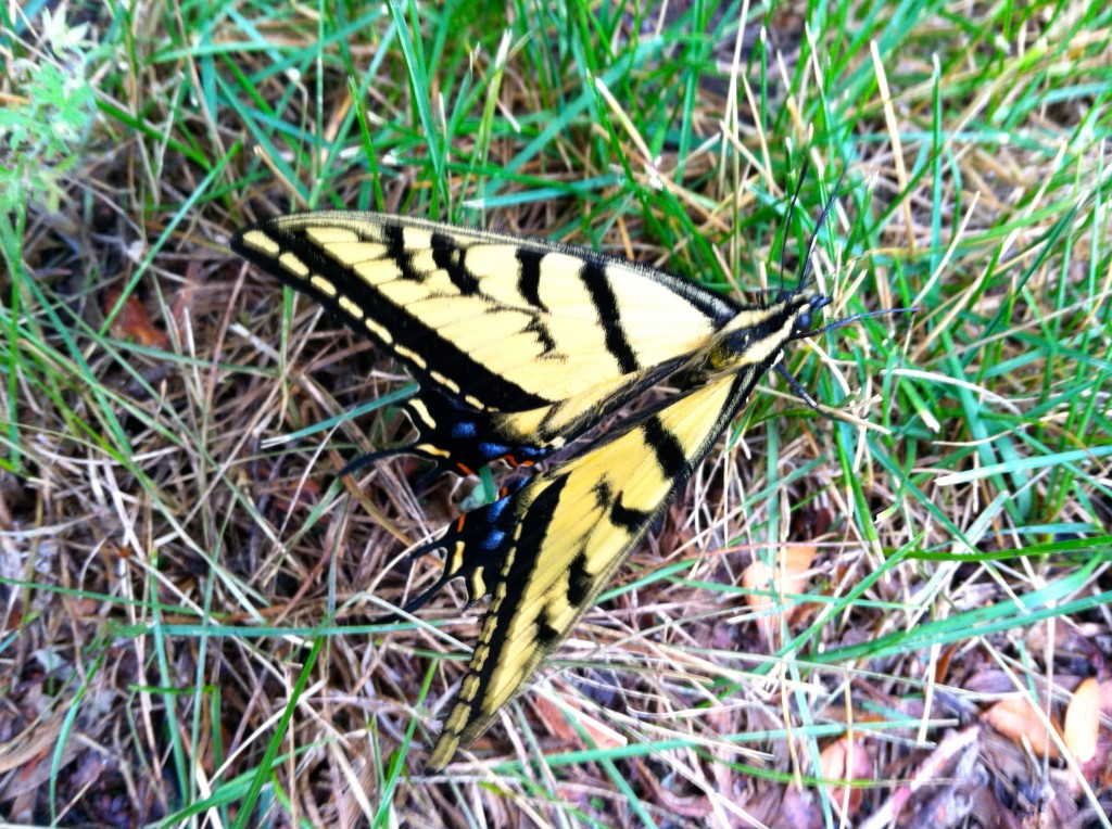 CalmUp® photo of yellow butterfly