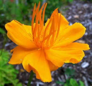 CalmUp® photo of bright orange flower