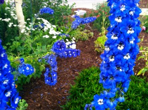 CalmUp® photo of tall blue flowers from Breckenridge