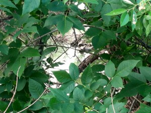CalmUp® photo of peering through leaves