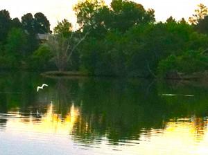 CalmUp® photo of bird flying away