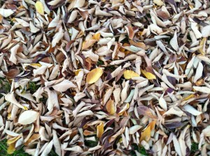 CalmUp® photo of dead leaves #2