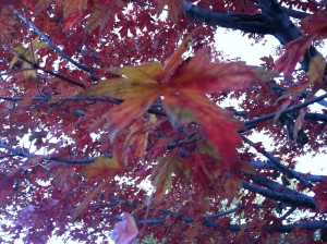 CalmUp® photo of dead leaves #1