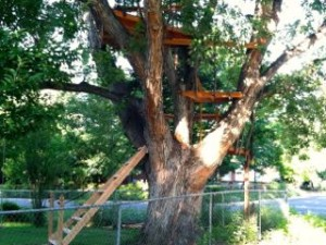 CalmUp® photo of tree house