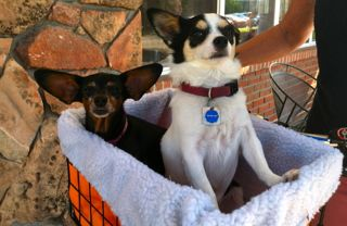 CalmUp® photo of doggies in basket